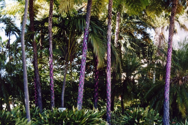 Tree Fern Polka 2003